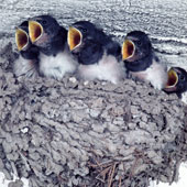 Solar Power System for Swallow Nest