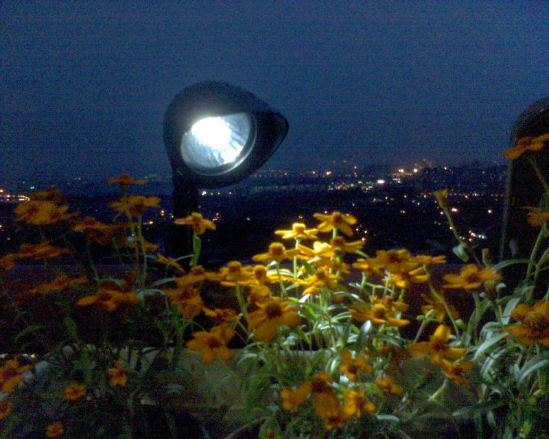 Spotlight to light up flower
