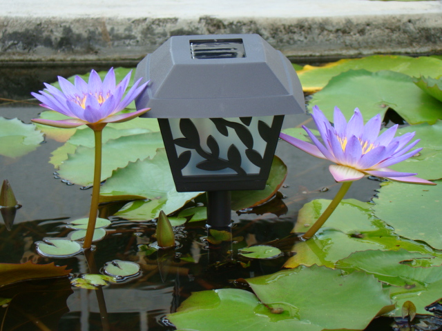 Solar Garden Light in a pond