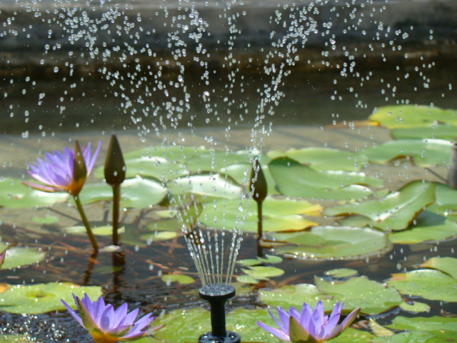 Solar Fountain Pump With LEDs Light & Timer