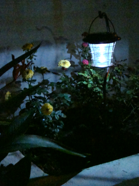 Solar Lantern with Roses