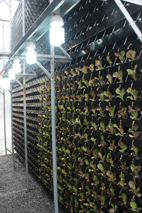 Vertical Farming with Lighting