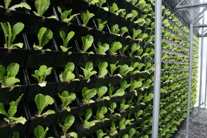 Vertical Farming and Garden